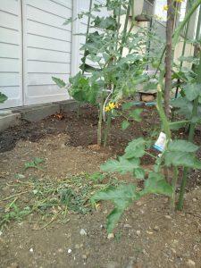 ミニ野菜畑 リフォーム