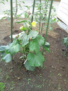 野菜畑 リフォーム