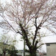 桜|リフォーム