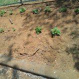 家庭菜園|リフォーム