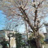 枝の剪定 リフォーム